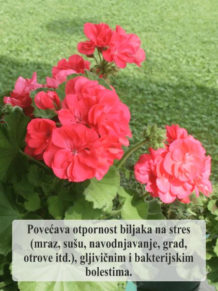 Ekosila za sve vaše cveće Povećava otpornost biljaka na stres (mraz, sušu, navodnjavanje, grad, otrove itd.), gljivičnim i bakterijskim bolestima.